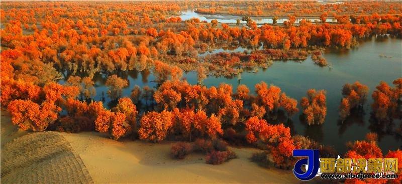 """<b>新疆塔里木盆地极旱荒漠里现""""极端美景""""(图)</b>"""