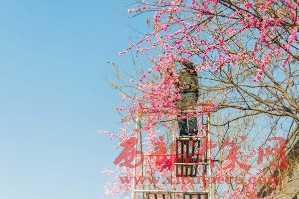 春节即将到来 处处年味