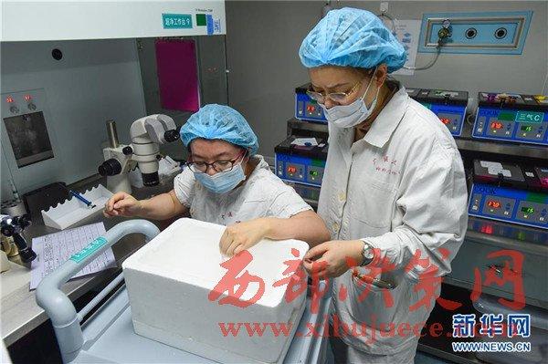 中国科学家首次将CRISPR基因编辑技术运用于人类二倍体