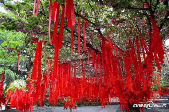 青龙寺5元一条许愿带火了 春天里百姓心愿挂满枝头
