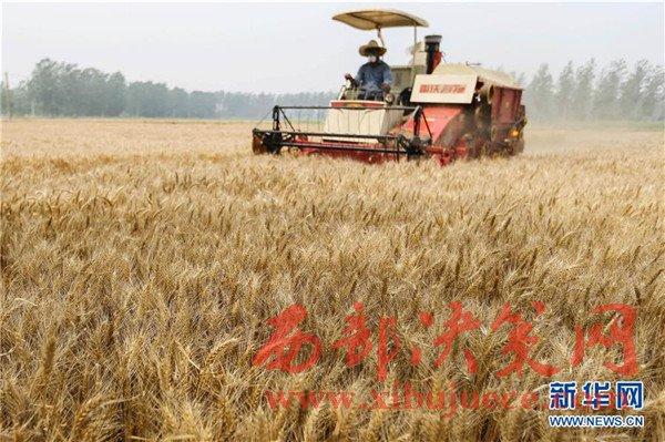 小满节气到 江苏小麦开镰收割