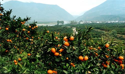 城固柑桔、城固蜜桔在第24届杨凌农高会上获好评