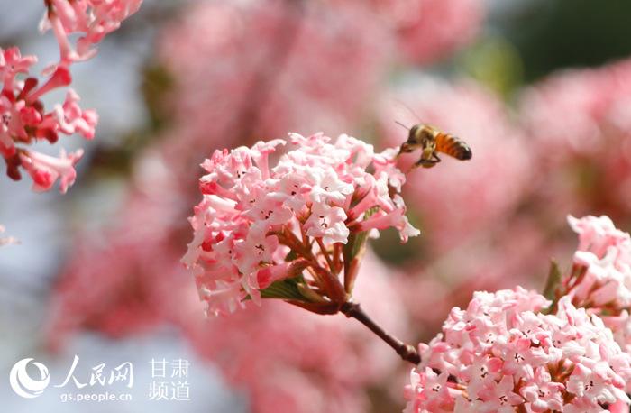 <b>春到金城</b>