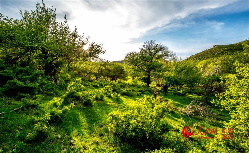 新疆托里:五月的果子沟如诗如画(组图)