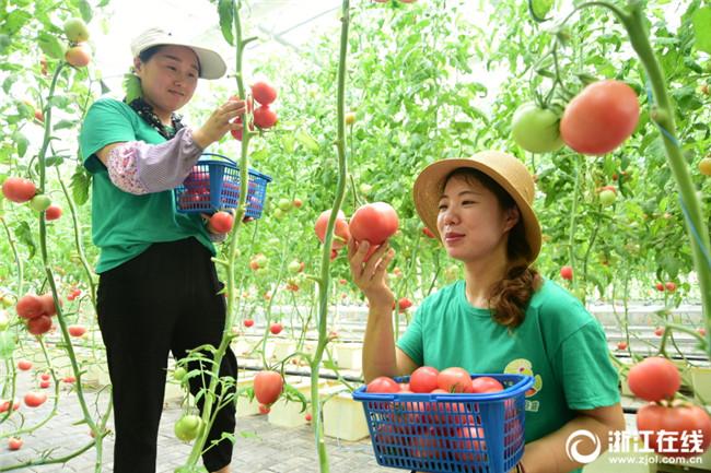 建德:无土栽培 绿色蔬菜