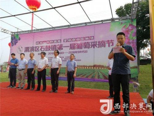 宝鸡渭滨区石鼓镇首届葡萄采摘节开幕