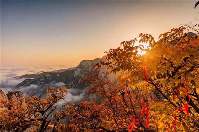 假期之后,华山最美秋色正当时!
