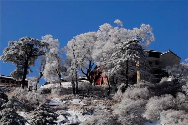 雪落华山松,深情而浪漫!