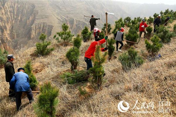 甘肃宁县春季林业生产行动早进展快