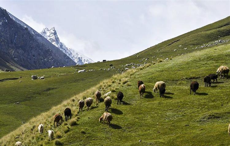 "<b>新疆塔什库尔干:""云端牧场""生态美</b>"