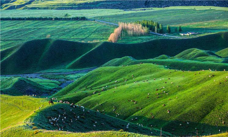 新疆乌苏白杨沟镇:别样的夏景尽在这里