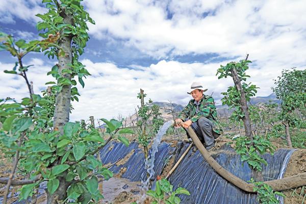 拉萨市墨竹工卡县唐加乡:苗木种植 鼓口袋