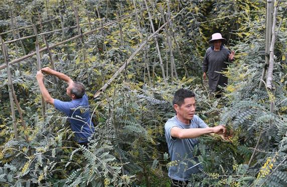 我国毛南族实现整族脱贫