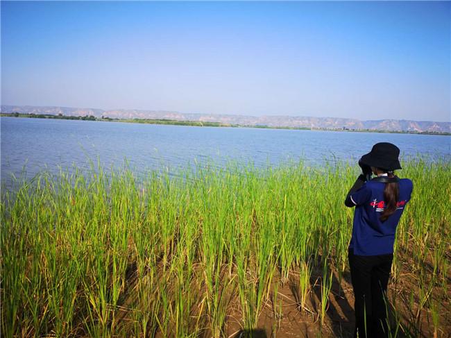 """陕西合阳:重拾""""湿地水韵"""" 打造生态治理新样板"""