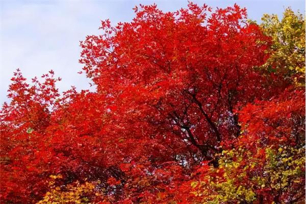 这个秋天,绝对不能错过华山