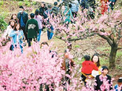 春风吹热赏花游